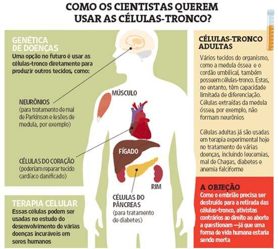 Células-tronco recuperam funções do fígado